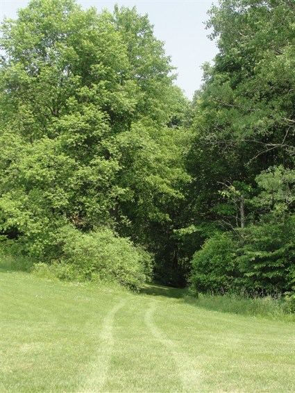 This is a photo of one of the entrances to the nature trail.  The photo is of a grassy path leading