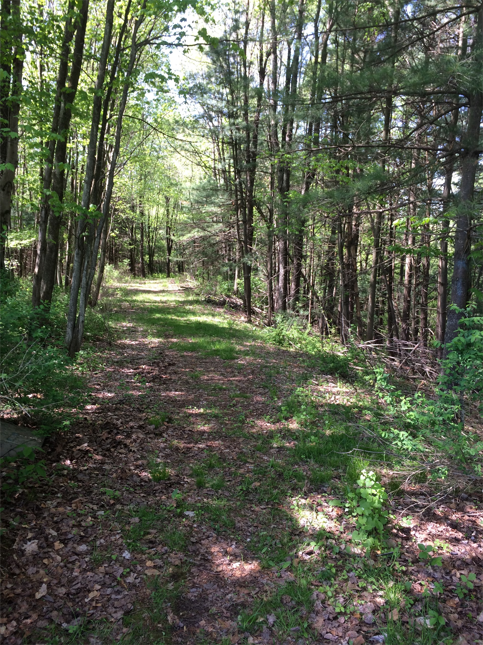 This is a photo of one of the nature trails.  There are a lot of trees that shade the path.  The gra